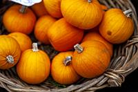 Pumpkins For Sale On A Market Stall, High Street, Lewes, East Sussex, UK.