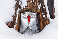 Skier and giant sequoia tunnel tree in the Tuolumne Grove, Yosemite National Park, California USA.