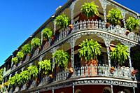 Ferns hang from ornate wrought iron railings on the galleries of the French Quarter in New Orleans.