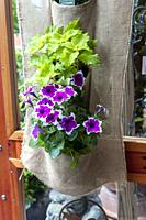 A simple fabric basket hung on a door holdint two small plants.