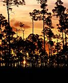 Trees silhouetted against an orange sunet sky in the Everglades National Park in southern Florida in the United States.
