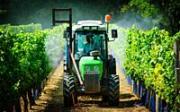 Farmer spraying the vineyard with water in the Dordogne, France in summer.