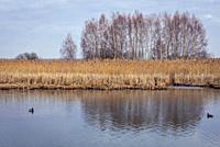 Wieliszewskie Lake in Wieliszew village in Legionowo County, Masovian Voivodeship of Poland.