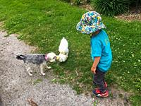 A toddler with two pet dogs on a hot summer day, Nova Scotia, Canada. A wide rim hat shades his face and is an effective protection against skin cance...