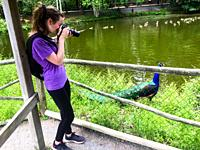 A woman photographs a male peacock at a wildlife park, Nova Scotia, Canada. Because of Covid 19, the park restricts the number of visitors to ensure s...
