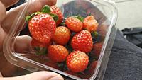 Bowl of strawberries. Wakayama, Japan.