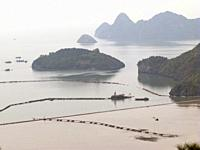 TOURIST AND FISHING BOATS IN HALONG BAY, VIETNAM.