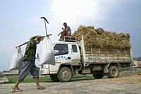 CHINA Truck loaded with hay during harvest time in Yunnan province.