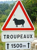 warning sign for sheep in Cevennes, France