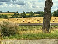 wooden fence and hay field near Touffailles, Tarn-et-Garonne Department, Occitanie, France.
