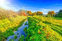 Tuscany landscape with small creek in autumn season, foliage colors.
