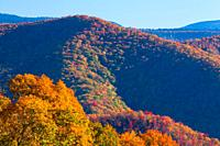 Colorful Autumn Foliage in the Great Smoky Mountains National Park.