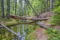 Priest Lake is the Crown Jewel of lakes in the magnificent outoor oriented State of Idaho, and it is known around the world for its majestic scenery, ...