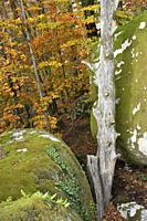 France, Tarn, The Sidobre in autumn .