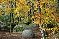 France, Tarn, Sidobre region, The rock formations in autumn .