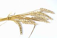 Wheat bouquet on a white background.