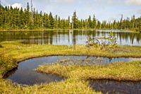 A swamp and lake in Strathcona Provincial Park, which is the oldest provincial park in British Columbia, Canada, and the largest on Vancouver Island.