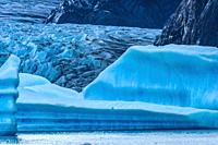 Blue Iceberg Grey Glacier Lake Southern Patagonian Ice Field Torres del Paine National Park Patagonia Chile.