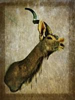 Kudu hunting trophy.