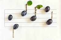 Conceptual Music Notes From Ripe Plums.