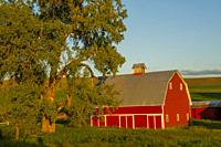 View a red barn in evening light near Pullman, Whitman County in the Palouse, Eastern Washington State, USA.