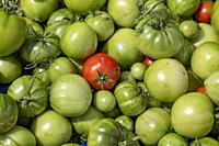 Detroit, Michigan - Tomatoes from Grassroots Garden, a community garden in a low-income area of Detroit.