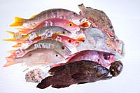 fresh-catch-of-fish-caribbean-seafood-isolated-on-white-background.