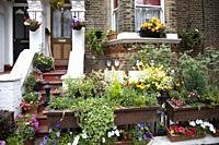 Home Exterior in Battersea with potplants and flowers, London UK.