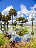 Flooded Big Flats area of Myakka River State Park in Sarasota Florida USA.