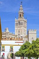 The Giralda, bell tower of Seville Cathedral top. View from Alcazar orange trees courtyard. Seville, Spain.
