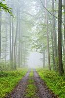 Path through misty beech forest, Nature Park, Spessart, Bavaria, Germany, Europe.