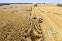 Fitchville, Ohio - Corn harvest on Ohio farm.