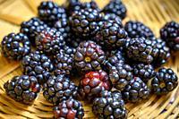 Blackberries (Rubus), Fallston, MD.