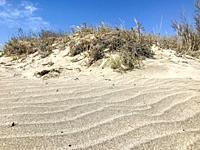 Sand Dunes In The Coastal Town Of Pomorie, Bulgaria.