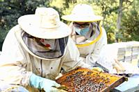 Beekeeper on apiary. Beekeeper is working with bees and beehives on the apiary. High quality image.