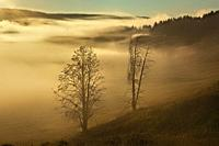 Mist in the Hayden Valley at sunrise, Yellowstone National Park, Wyoming, USA.