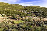 Vegetation on Patones Hills. Madrid. Spain. Europe.