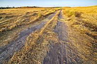 Pathway between the stubble in the summer. Pinto. Madrid. Spain. Europe.
