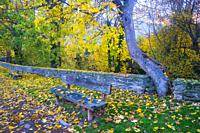 Wooden benches in Autumn.