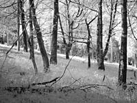 Infrared image of woodland at Fuller's Hay in the Mendip Hills, North Somerset, England.