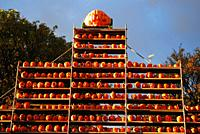 Hundreds of carved pumpkins line a tower of shelves during an autumn festival in Keene New Hampshire.