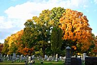 Autumn Trees in Cemetery, Wellsville, New York, USA.