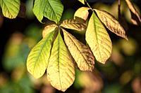 Autumn leaves - Asheville, North Carolina.