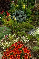 Indian Blanket (Gillardia) flowers in the foreground in a garden in Kirkland, Washington State, USA.