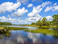Webb Lale in the Fred C. Babcock/Cecil M. Webb Wildlife Management Area in Punta Gorda Florida USA.