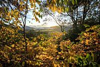Fall foliage on the Blue Ridge Parkway at sunrise - Chestnut Cove Overlook - Asheville, North Carolina, USA.