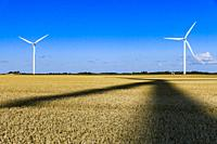 Hjorring, Denmark Wind turbines in a field of wheat and large shadow of another wind turbine.
