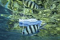 RED SEA, SHARM EL SHEIKH, EGYPT - OCTOBER 18-26, 2020: Discarded medical face mask slowly drifts under surface of water with tropical fish. Coronaviru...