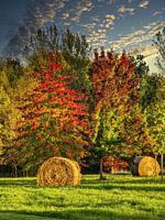 bales of hay and autumn colours, Lauzun, Lot-et-Garonne Department, Nouvelle Aquitaine, France.