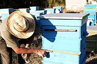 Preparing honey bees for winter.
